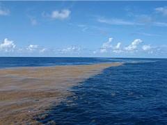 La Mer des sargasses