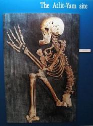 alit-yam-human-skeleton