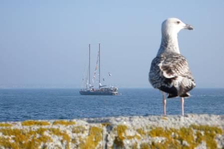 Tara est un voilier en aluminium conçu pour la navigation en mers polaires. La forme de sa coque lui permet d'être pris par la glace de la banquise. Dans cette situation, il serait simplement soulevé. © Jean-Luc Goudet, Futura-Sciences