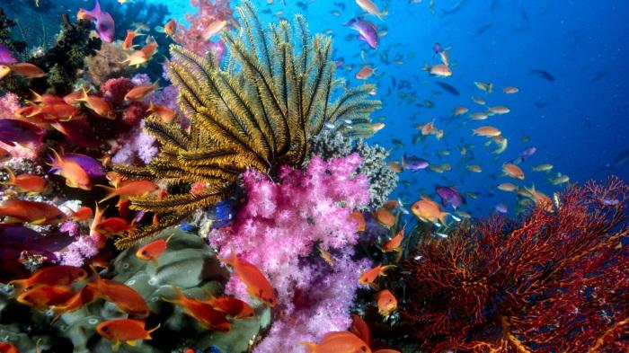 Source image: gdefon.com/