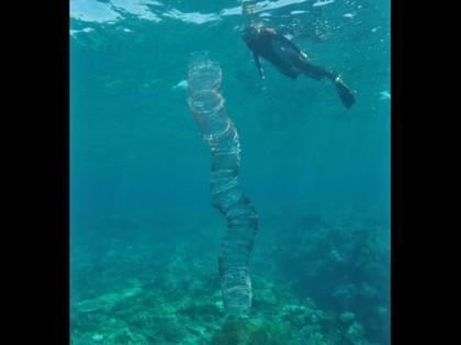 Un intrigant amas d'œufs de calmar, sur la Grande Barrière de corail. (Photo : © Lyle Vail)