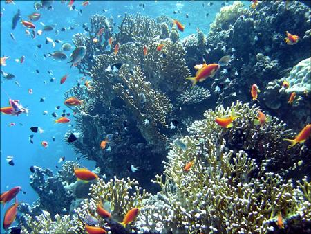 Massif de corails crédit: .jedessine.com/c