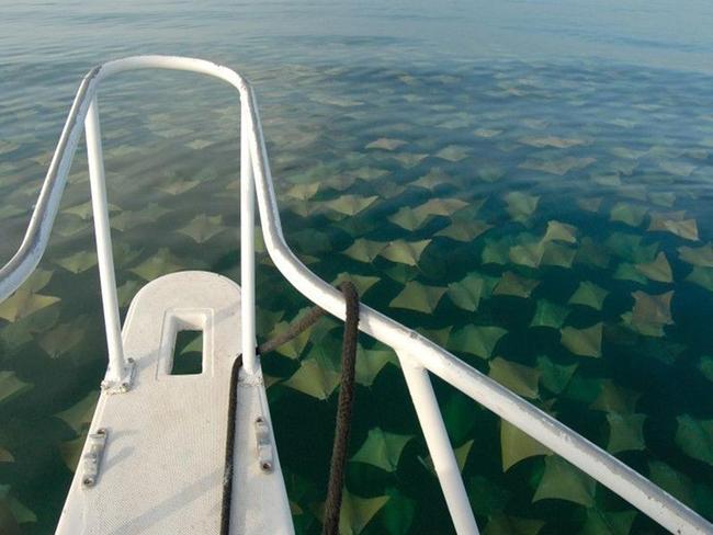 A bord de votre bateau, vous regardez en bas et découvrez ça. Crédit:rtl.be